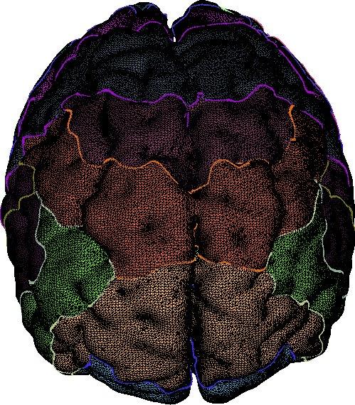 MMMNG_brain_mesh